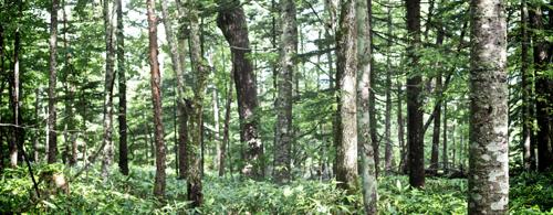 再フプの森画像3 .jpg