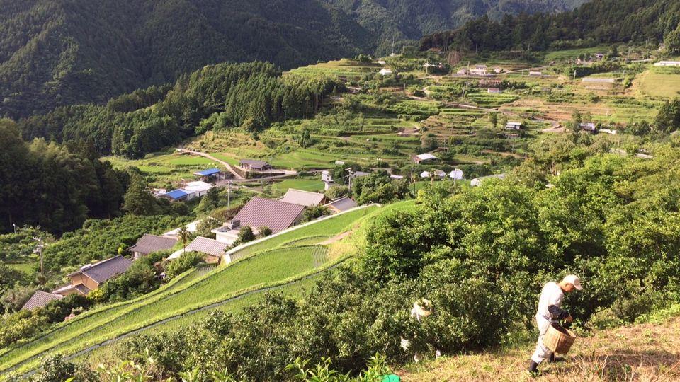 「徳島県上勝町」の検索結果 - Yahoo!検索(画像)