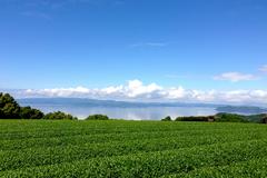 長崎 大山製茶園のそのぎ茶