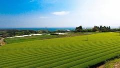 宮崎 宮崎のお茶を伝える「白玄堂」の新茶